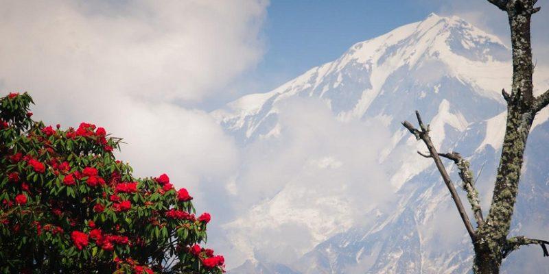 http://climatenewsnetwork.net/himalayan-bloom-spring-forward/